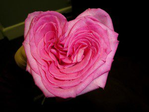 heart love flower