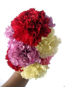carnations multicolored